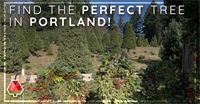 Find the Perfect Tree in Portland!